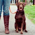 Udemy Dog Behavior & Training Problems