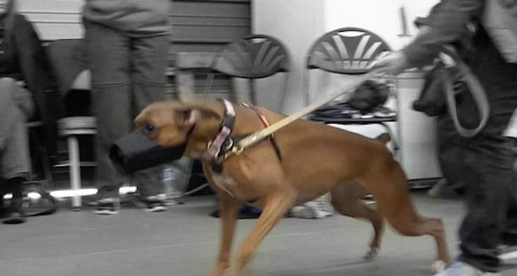 How to Deal with Dogs that are Aggressive Towards Other Dogs